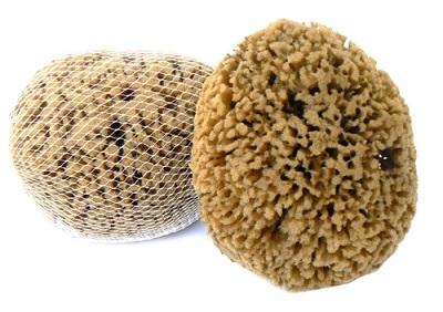 Mořské houby a vulkanická pemza