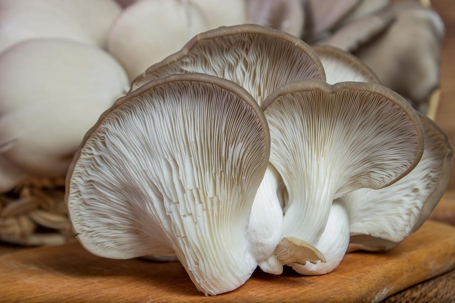 Fresh Oyster Mushroom On The Board