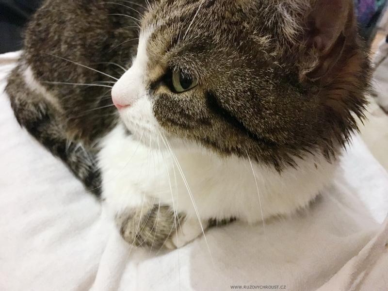 Kočič